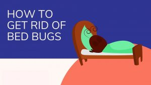 How to Get Rid of Bed Bugs – Find, Kill & Prevent Reinfestation of Bedbugs